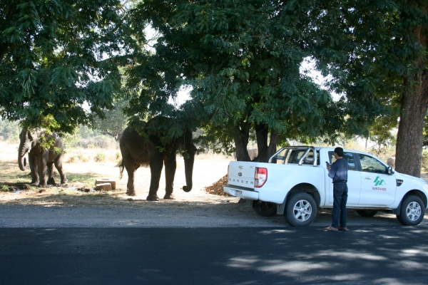 There were elephants on the side of the road, you know, just casual. And then some idiot decides it's a good idea to GET OUT OF HIS CAR to take photos. Thankfully, the elephant chased said idiot away.