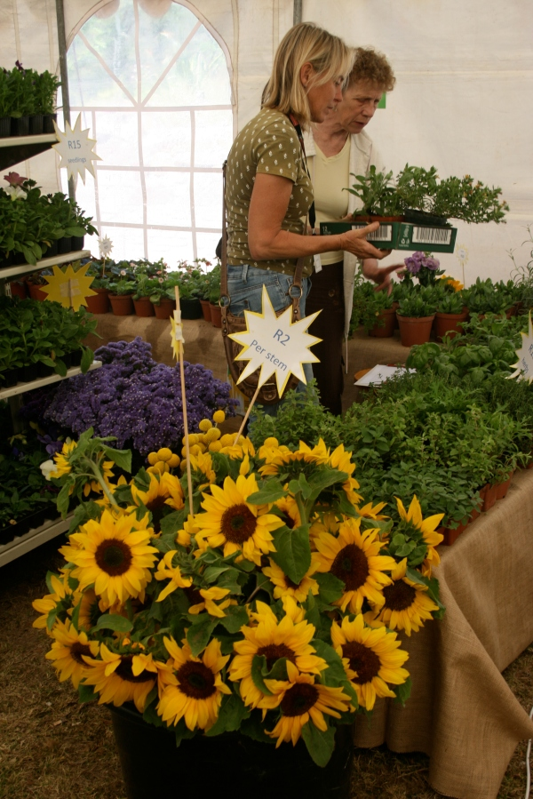 Gorgeous sunflowers being sold out of the sun...