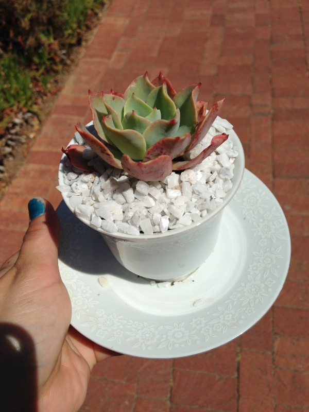 My new plant!