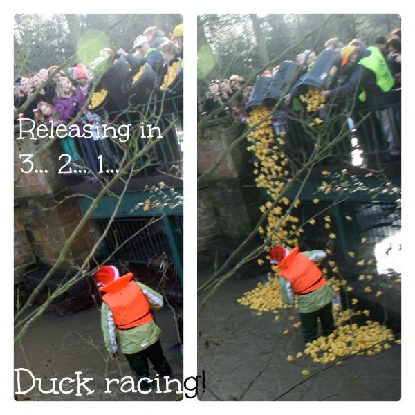 Duck racing .jpg