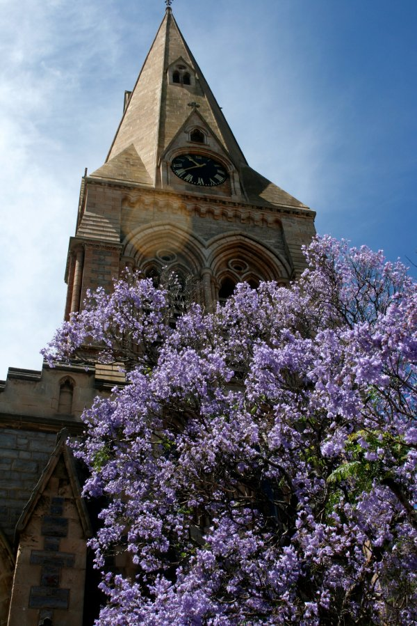 Cathedral with Jacarandas